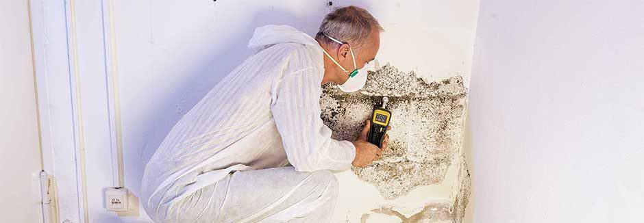 boynton beach mold removal